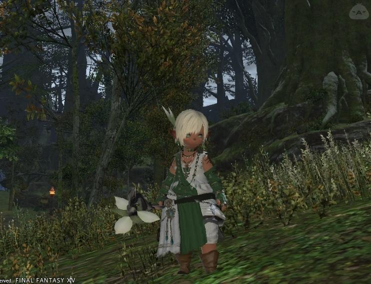 森に住まう癒しの民