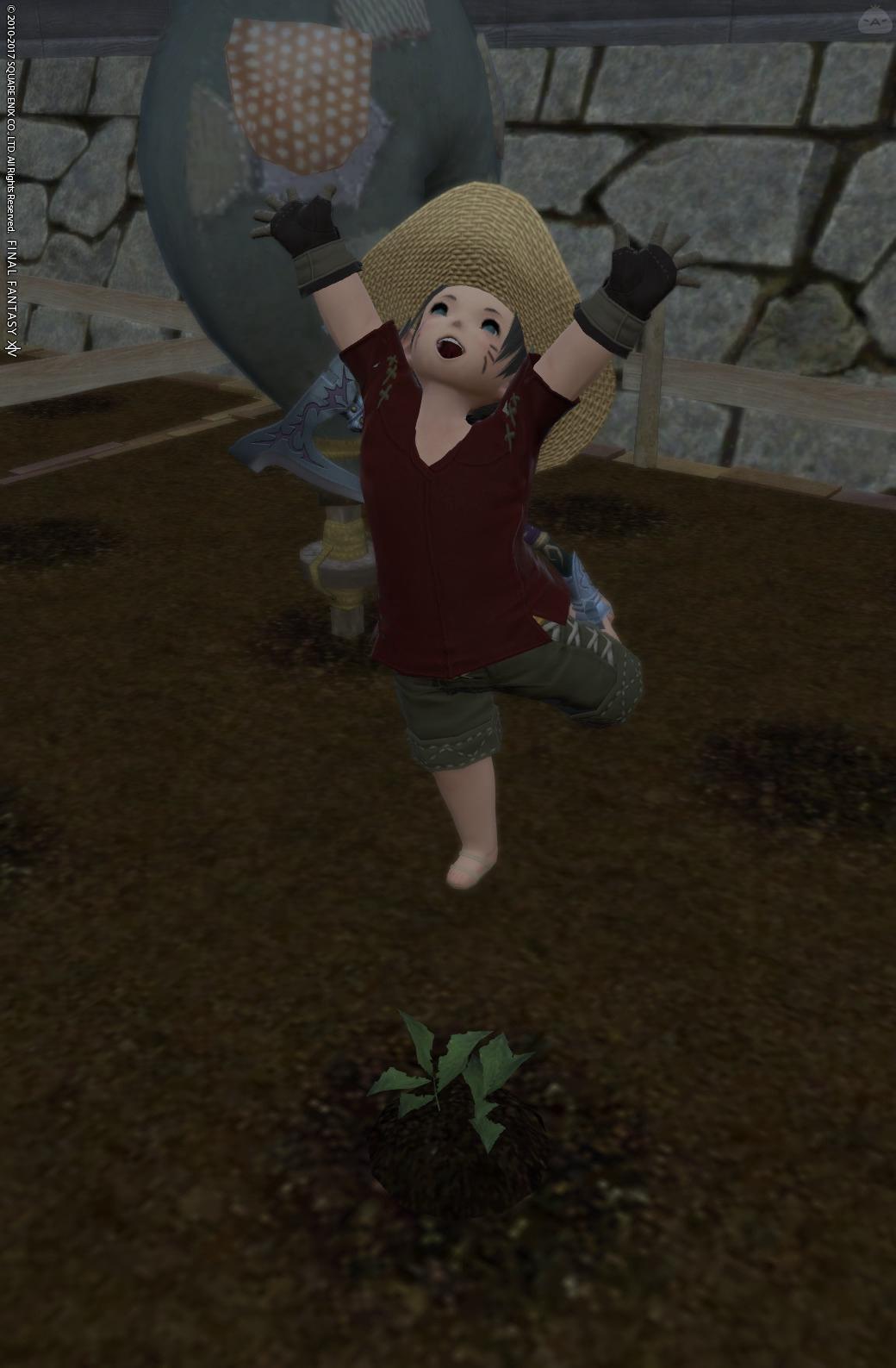 畑仕事のお手伝い