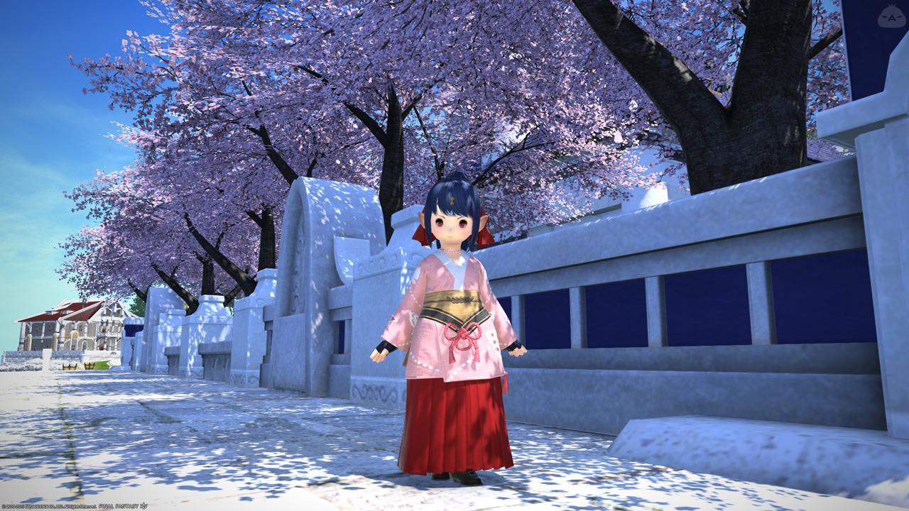 大正桜に浪漫の嵐